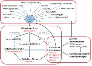 Die 3 Komponenten der selbstverstärkenden Kreisläufe der chronischen Entzündung