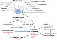 Selbstverstärkender Kreislauf der chronischen Entzündung durch nitrosativen Stress, basierend auf Umwelt-Faktoren und u.a. VGCC, NMDA2-Rezeptor Aktivierung.