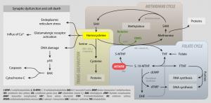 MTHFR-Metabolismus