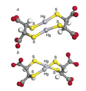 Berechnete Strukturen der beiden Diastereomere des kleinstmöglichen DMSA Hg 2+ Komplexes. Die Kohlenstoffatome werden als dunkelgrau, Sauerstoffatome als rot, Wasserstoffatome als weiß, Quecksilberatome als hellgrau und Schwefelatome als gelb dargestellt.