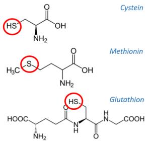 Schwefel bzw. Tiol- (SH-) Gruppenhaltige Aminosäuren bzw. Peptide: Cystein, Methionin & Glutathion (GSH)