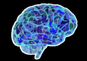 Gehirn - Dopamin