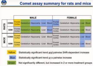 Zusammenfassung der NTP-Studie in Bezug auf die beobachteten Auswirkungen & Krankheiten