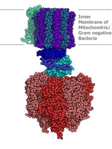 EMF Wirkung über die ATPsynthase nach Héroux