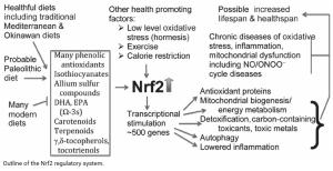 NRF2 Stimulierende Faktoren