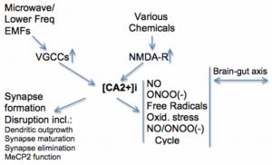EMF und Stress durch Chemikalien wirken zusammen & erhöhen den Calcium-Level in Zellen - und machen damit Zellstress.