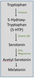 Synthese-Schritte von Tryptophan zu Melatonin.