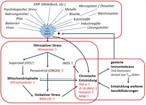 Die 3 Komponenten der selbstverstärkenden Kreisläufe der chronischen Entzündung.
