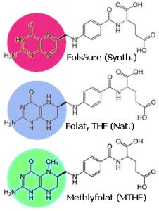 Die verschiedenen Arten von 'Folsäure': Synthetisches Folsäure, natürliches Folat (viel THF) und biologisch aktives Methylfolat (MTHF)