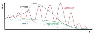 Eine Variante des Verlaufs von Cortisol, Adrenalin und der Steroidhormone im Verlaufe einer Nebennierenschwäche