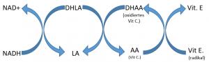 NADH recycelt DHLA, was Vitamin C aus oxidiertem Ascorbat recycelt und somit Vitamin E wieder herstellt.
