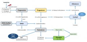 Das Steroid-Hormonsystem (Einfach). Anm.: Blaue Kästen sind Hormone die von der Nebenniere gebildet werden.