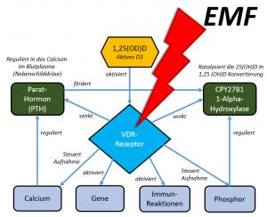 Der Vitamin-D Rezeptor (VDR) und seine Funktionen - durch WLAN-EMF wohl mal eben aktiviert oder auch nicht - was kann da schon schief gehen....