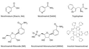 Die verschiedenen Formen von Vitamin B3.