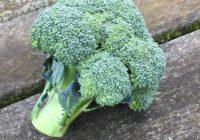 Brokkoli: Stark in Vitamin C, E, K und vielem mehr!